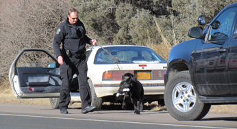 K-9 Unit Conducting Vehicle Search